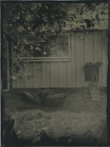 A wetplate of my henhouse