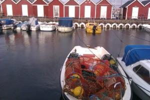 a maximum of 14 lobster pots allowed