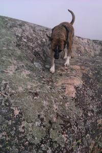 Kika on the rocks