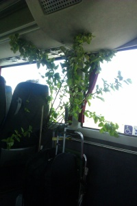 Tree on the bus