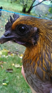 Vera fits right into autumn with her bright orange feathers