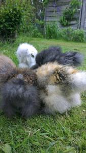 Fluffy butts!