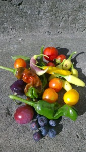 A modest but colourful harvest