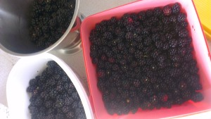 3 litres of hard earned berries